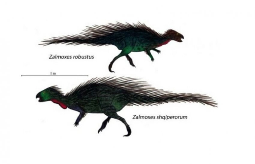 Zalmoxes shqiperorum, dinozauri i emëruar sipas Shqipërisë