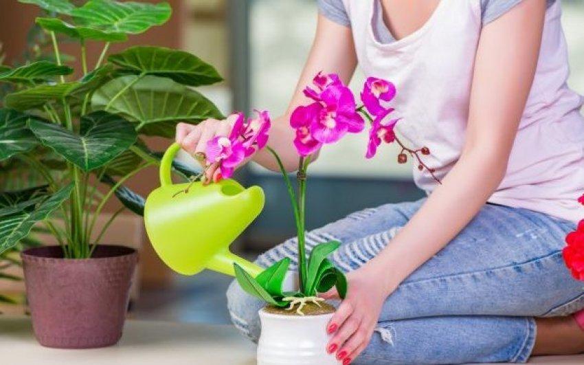 ujiteni-orkidene-me-caj-te-gjelber
