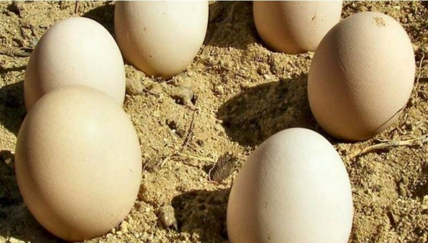 Zbulohen vezët e 85 milionë viteve më parë