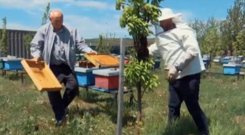 Pickimi nga bletët e shpëton nga reuma